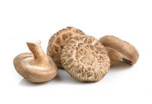 Shiitake mushroom immune properties