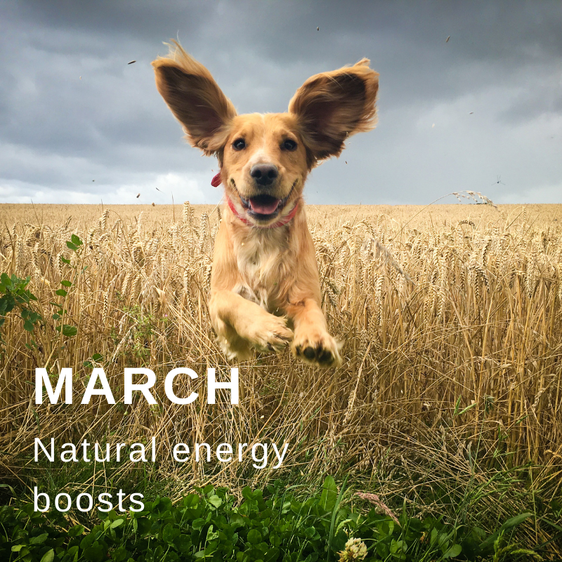 March wellbeing subscription